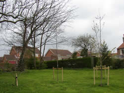 ...and ornamental trees planted